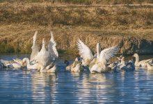Photo of Во кое Пелагониско село се одгледуваат овие пердувести убавици