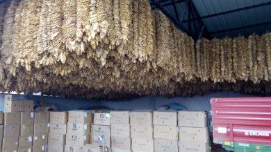 Photo of Се бара решение за вишокот на тутун за кој првично има согласност од откупувачите дека ќе биде откупен