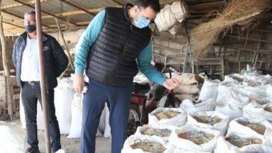 Photo of Се зголемуваат субвенциите за оризарите без сертифициран семенски материјал