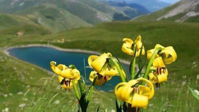 Photo of Со постоечкиот закон за заштита, Шар Планина уште повеќе ќе се пустоши