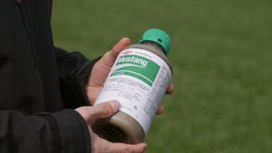 Photo of Mustang – Вистинско решение за сузбивање на широколисни плевели во житарици и пченка