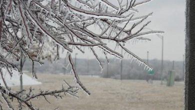 Photo of Да се внимава на заштитата на земјоделските култури во зимските денови, апелираат агрономите