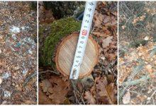 Photo of Млада шума се сече во близината на Езеро Младост