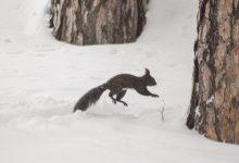Photo of Битола-Вервериците во потрага по храна