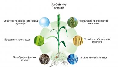 Photo of Заштита на житните култури (пченица, јачмен, рж, тритикале) од болести