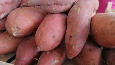 Photo of Од овој зеленчук заработката е 10.000 евра по хектар