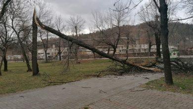 Photo of Ветрот ноќеска корнеше дрвја низ Битола