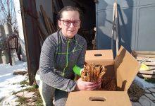Photo of Ирена Змејкоска-Жената земјоделец е сам свој газда