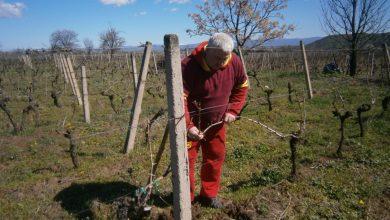 Photo of Станушина – Винскиот свет на Македонија од пред еден милениум