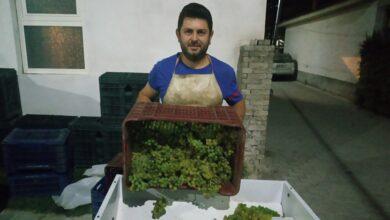 Photo of Блаже Стојановски-Голем е предизвикот да се биде на двете страни и лозар и винар