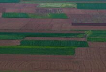 Photo of Душата полна-Нивите околу Црнобуки како килим исткаени